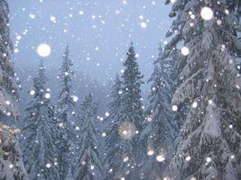 Обои елки, лес, зима, снег, хлопья, снегопад, фото, шапки, мороз, пейзажи, природа