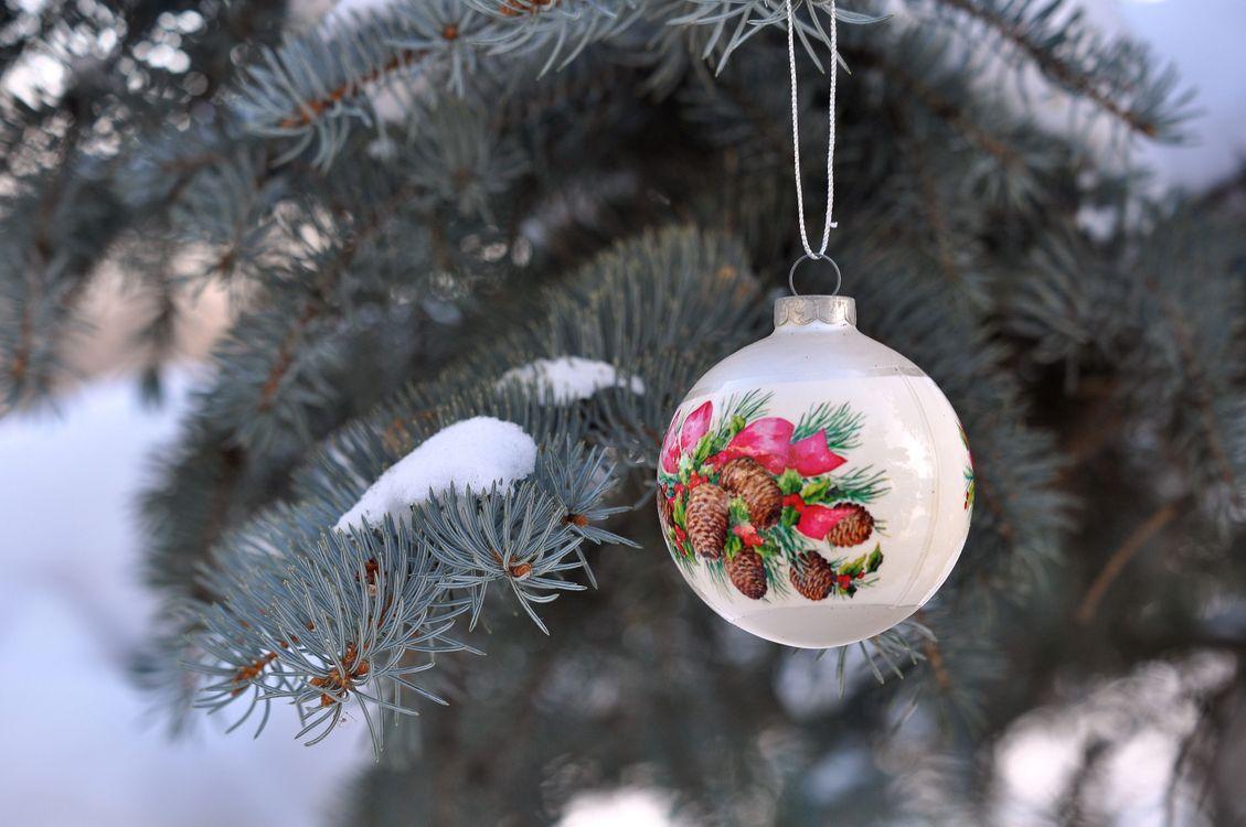 Фото бесплатно живая, елка, ветки, снег, новогодняя, игрушка, одна, на дворе, новый год, новый год
