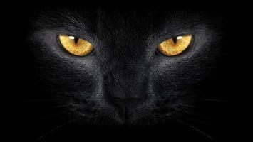 Бесплатные фото кот,черный,глаза,желтые,морда,шерсть,кошки