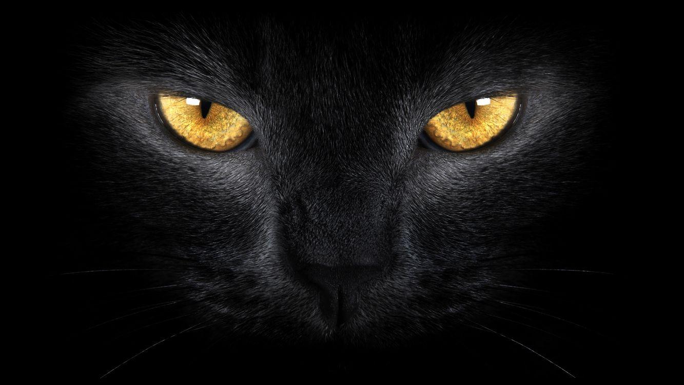 Фото бесплатно кот, черный, глаза, желтые, морда, шерсть, кошки, кошки