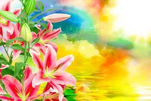 Фото бесплатно лилия, лилии, красивый фон