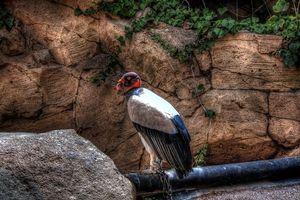 Фото бесплатно крылья, клюв, глаз