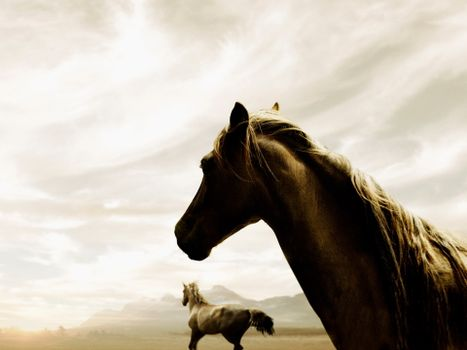 Фото бесплатно лошадь, конь, грива