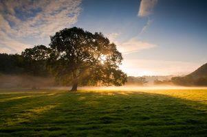 Бесплатные фото рассвет,дерево,поляна,трава,туман,лучи,солнце