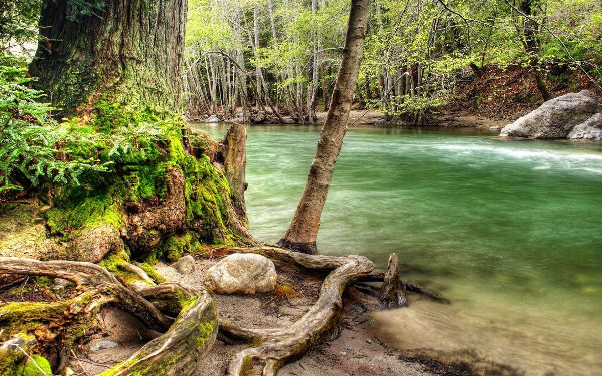 Фото бесплатно река, лес, горная, кора, корни, пень, деревья, камни, ручей, природа, пейзажи, пейзажи