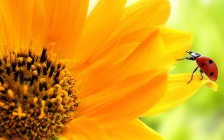 Бесплатные фото ромашка,цветок,тычинки,аромат,лепестки,божья коровка,крылья