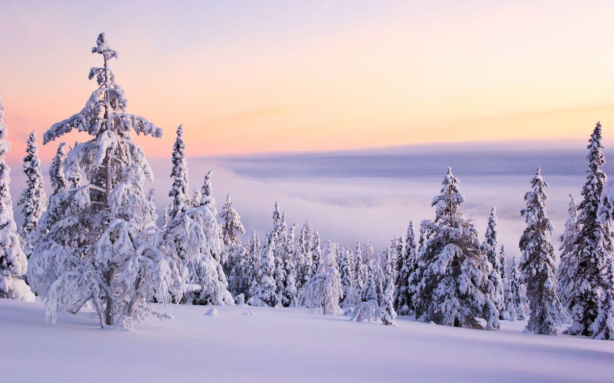 Фото бесплатно снег на деревьях, зима, снег - на рабочий стол