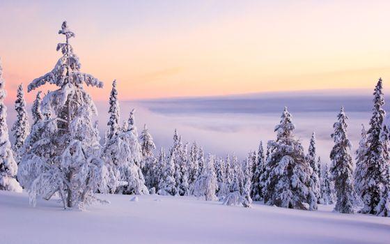 Заставки снег на деревьях,зима,снег,закат,деревья,природа