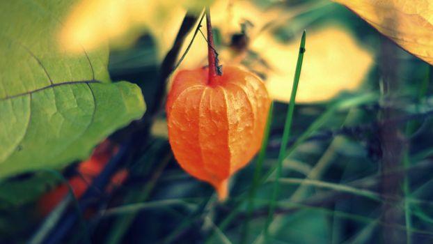 Photo free flower, orange, grass