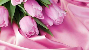 Фото бесплатно тюльпаны, лепестки, шелк, ткань, стебли, листья, зелень, цветы