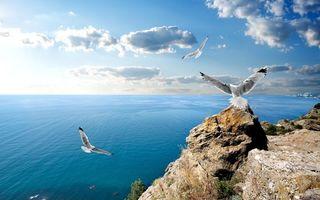 Бесплатные фото чайки,полет,море,берег,камни,небо,птицы