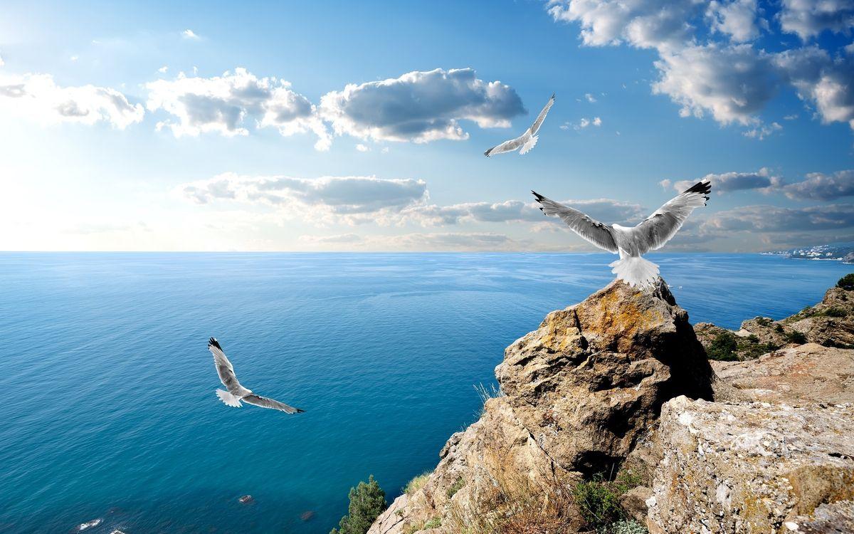 Фото бесплатно чайки, полет, море, берег, камни, небо, птицы, птицы