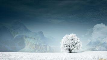 Бесплатные фото дерево,поле,трава,снег,небо,горы,природа
