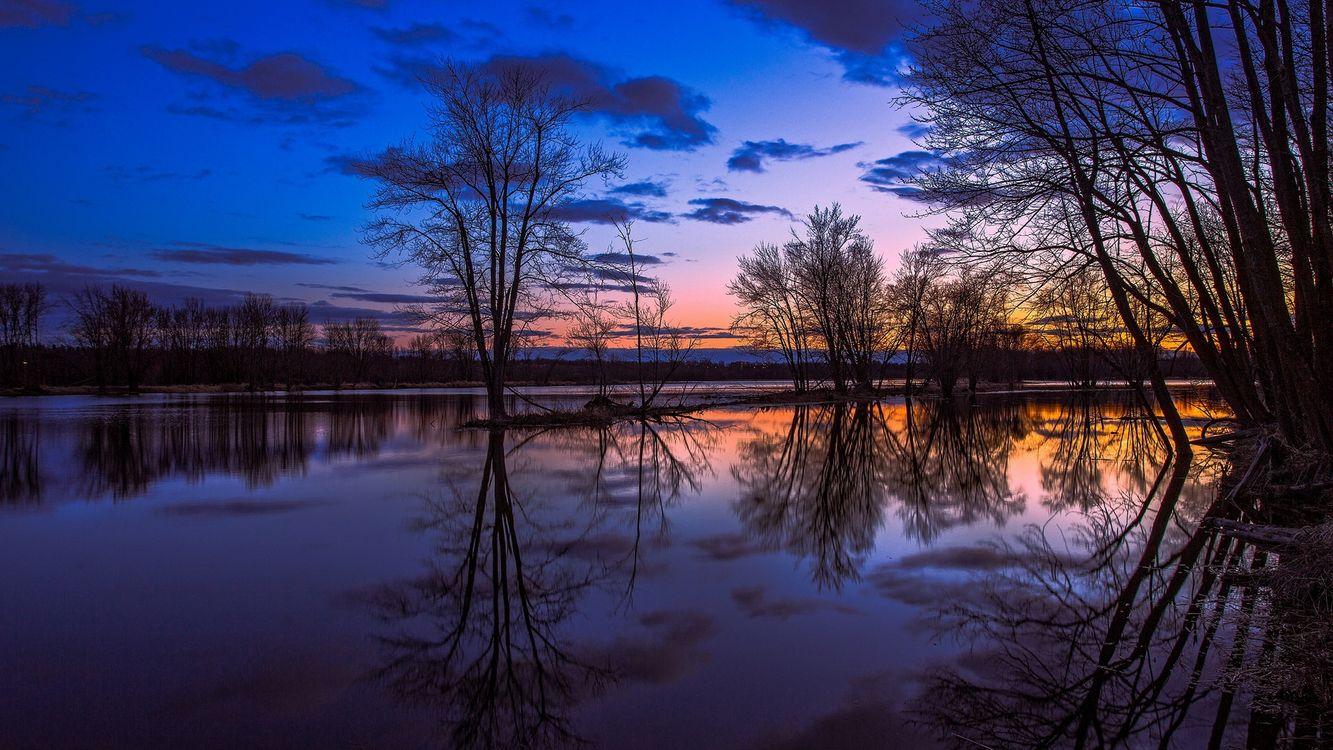 Фото бесплатно деревья, озеро, вода, лето, закат, сумерки, облака - на рабочий стол