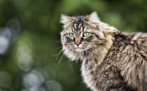 Фото бесплатно кот, пушистый, раскраска