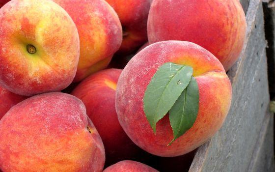 Бесплатные фото фрукты,персики,красные,листья,зеленые,ящик,еда