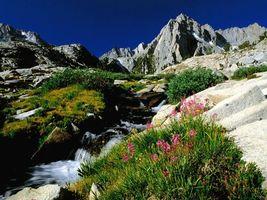 Бесплатные фото горы,высокие,трава,зеленая,цветы,небо,природа
