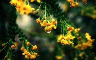 Photo free drop, rain, yellow