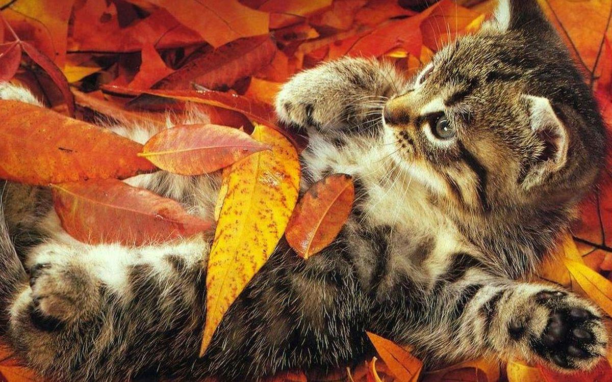 Фото бесплатно котенок, морда, лапы, шерсть, листва, кошки, кошки