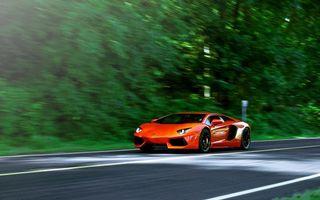 Бесплатные фото ламборджини,оранжевая,скорость,дорога,разметка,деревья,машины