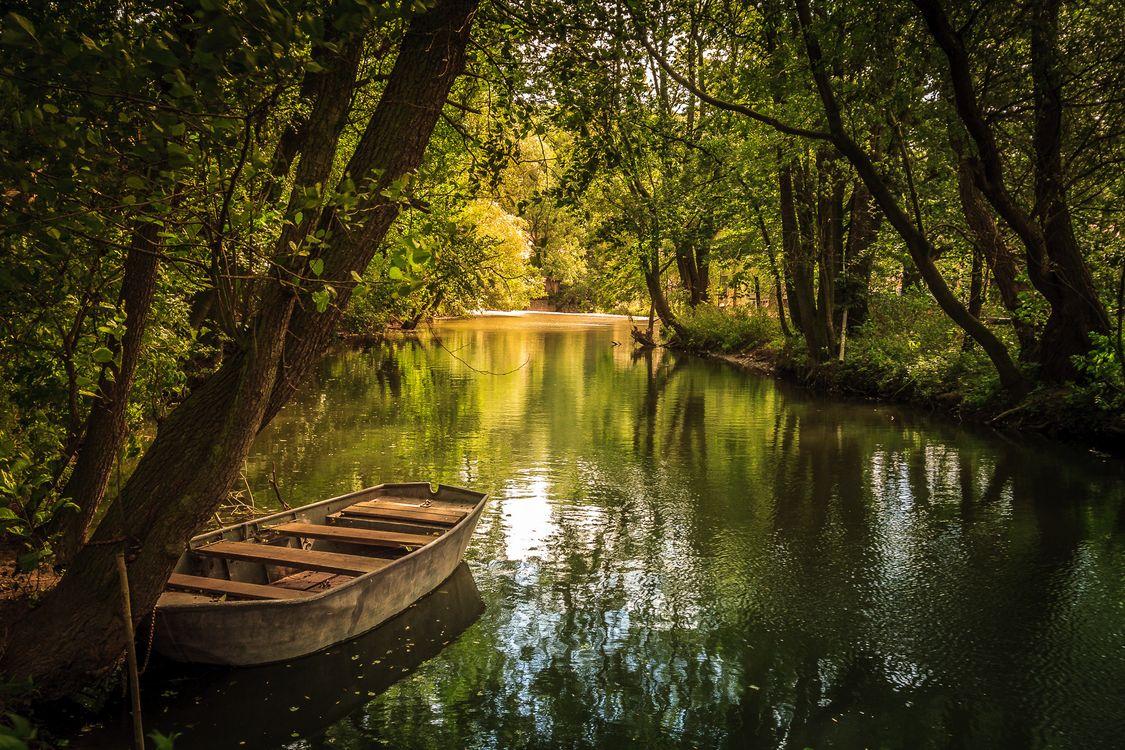 Фото бесплатно лес, деревья, река, лодка, пейзаж, пейзажи