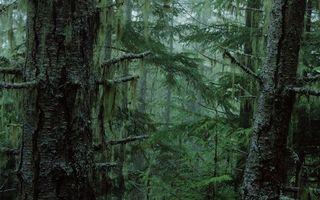 Бесплатные фото лес,елки,ели,иголки,мрак,страх,кора