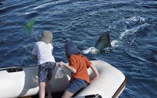 море, лодка, дети, пугают, акулу
