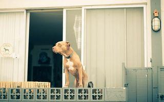 Бесплатные фото пес,щенок,лапы,нос,уши,балкон,дом