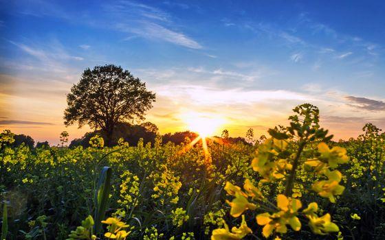 Фото бесплатно природа, цветы, солнце
