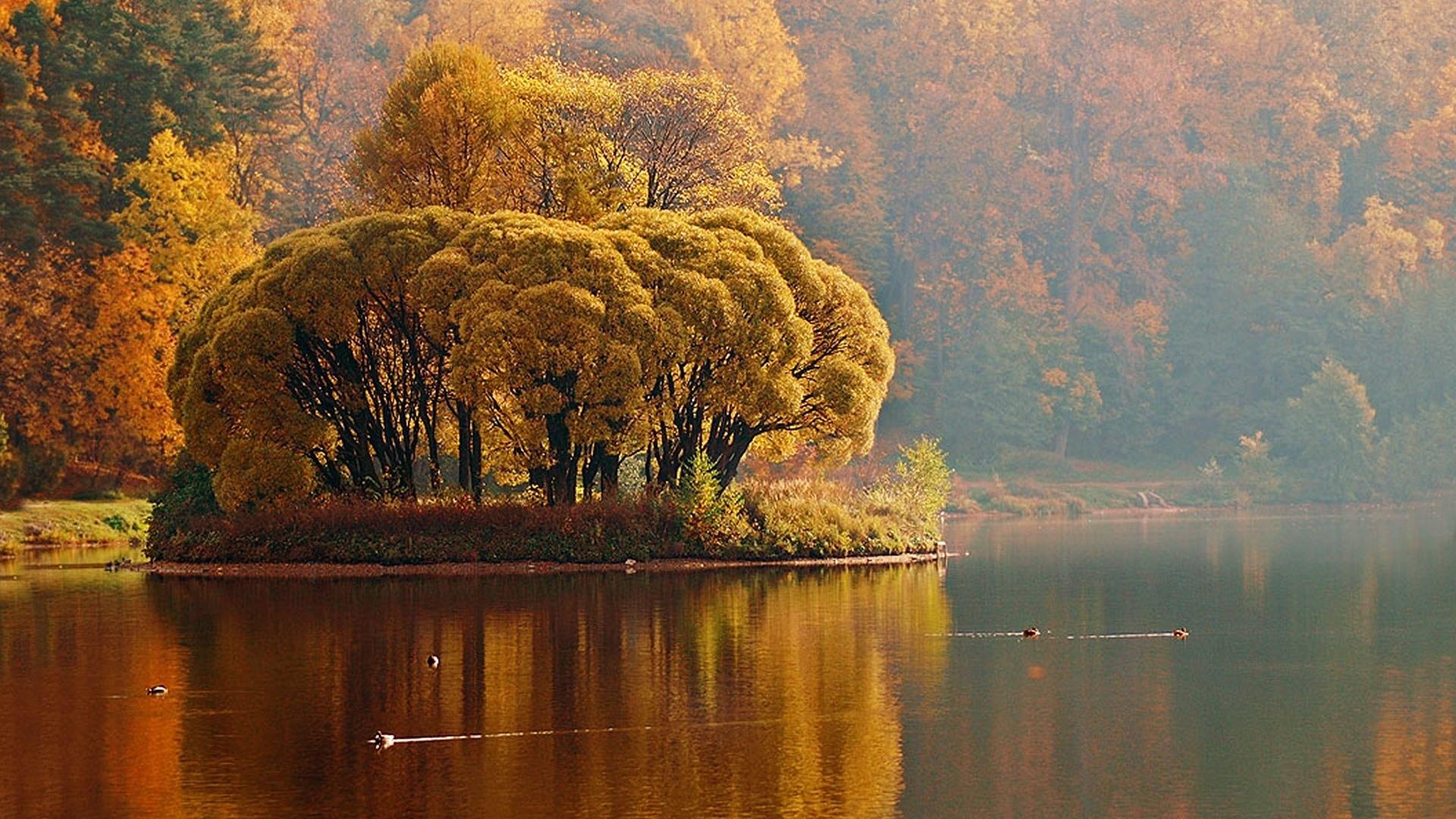 Обои река, деревья, утки, течение