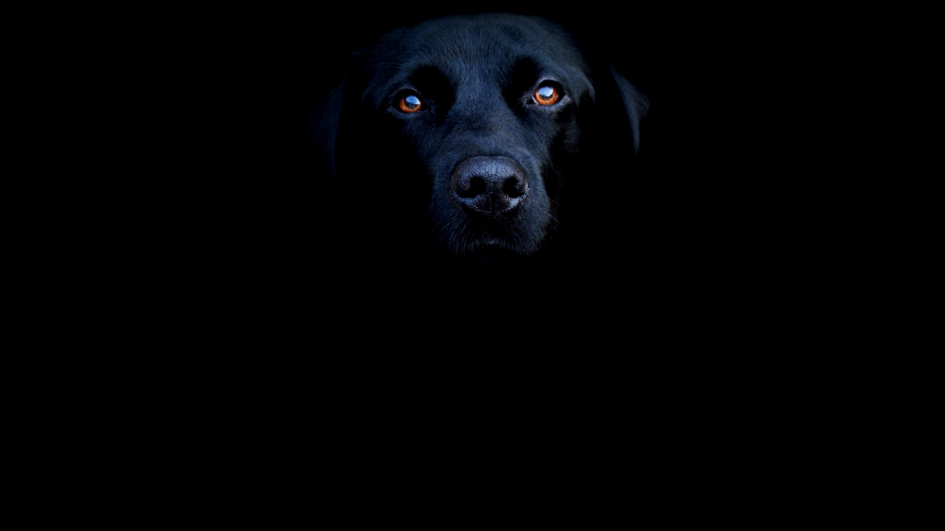 Пёс черный взгляд  № 1127418  скачать
