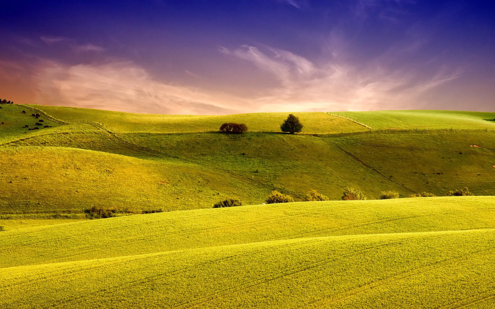 Вид на поле  № 1647021 бесплатно