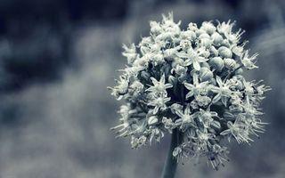 Бесплатные фото цветы,природа,серый,лепестки,ветка