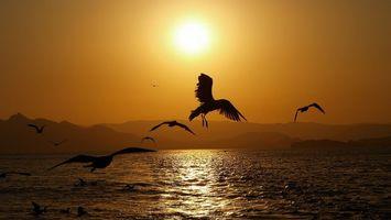 Фото бесплатно закат, солнце, чайки