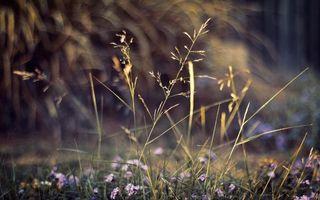 Заставки макро,природа,растения,цветы,боке