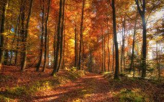 Бесплатные фото осенний лес,тропа,дорога,листья,опавшие,природа