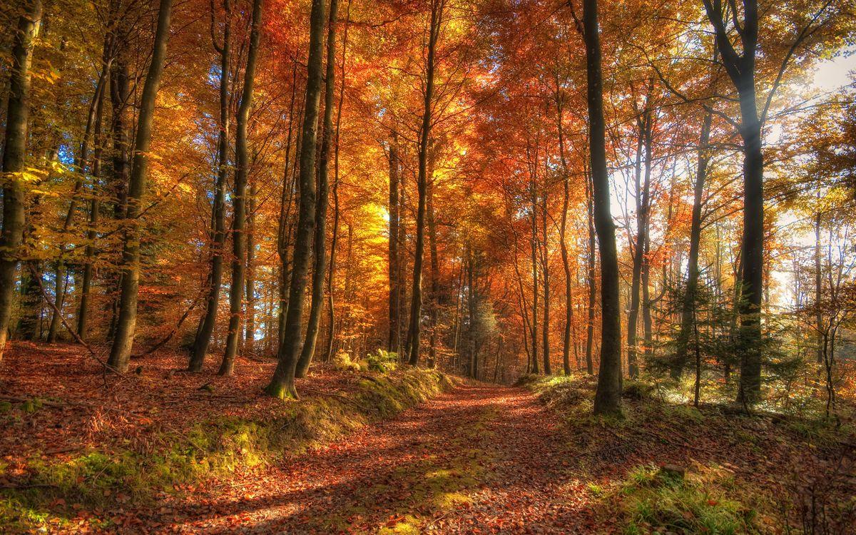 Фото бесплатно осенний лес, тропа, дорога, листья, опавшие, природа, природа