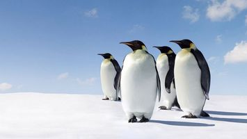 Фото бесплатно антарктика, снег, пингвины