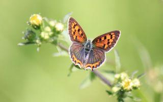Бесплатные фото бабочка,оранжевый,крылья,ветка,цветы,листья,насекомые