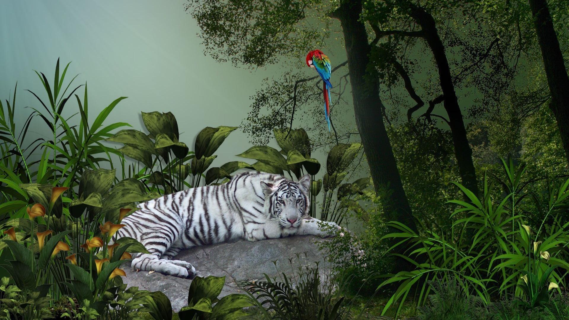 белый, бенгальский, тигр