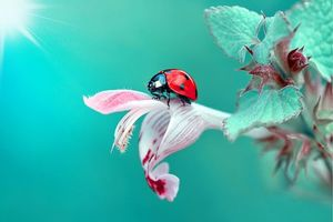 Photo free insects, macro, flora