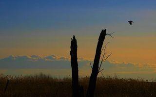 Фото бесплатно небо, полет, поле