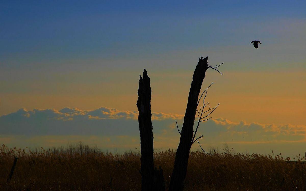 Фото бесплатно дерево, кора, ствол, орел, полет, трава, поле, высота, небо, облака, природа, птицы, пейзажи, пейзажи - скачать на рабочий стол