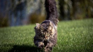 Photo free cat, tail, eyes