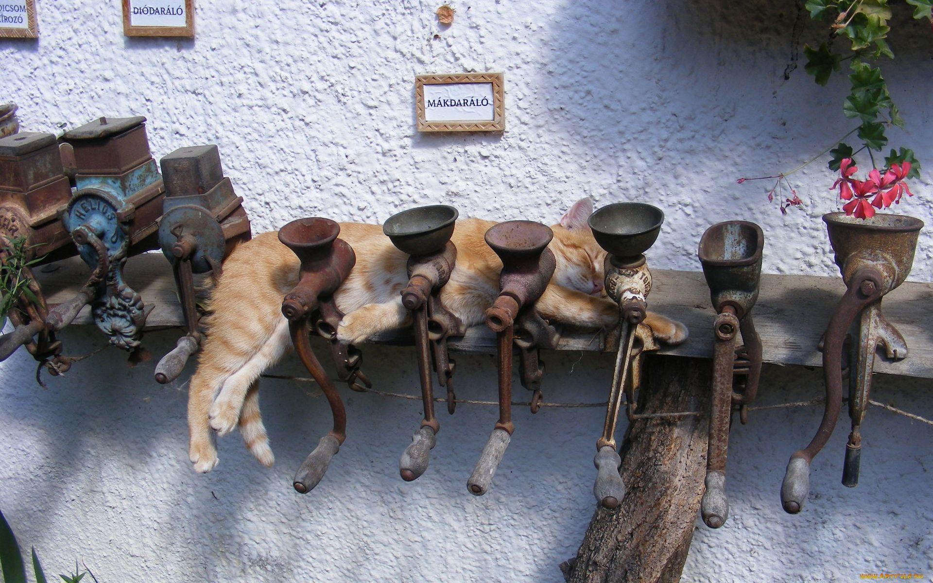 кот, сон, мясорубка