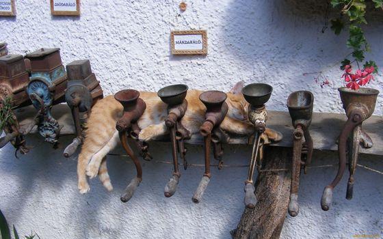 Фото бесплатно кот, сон, мясорубка