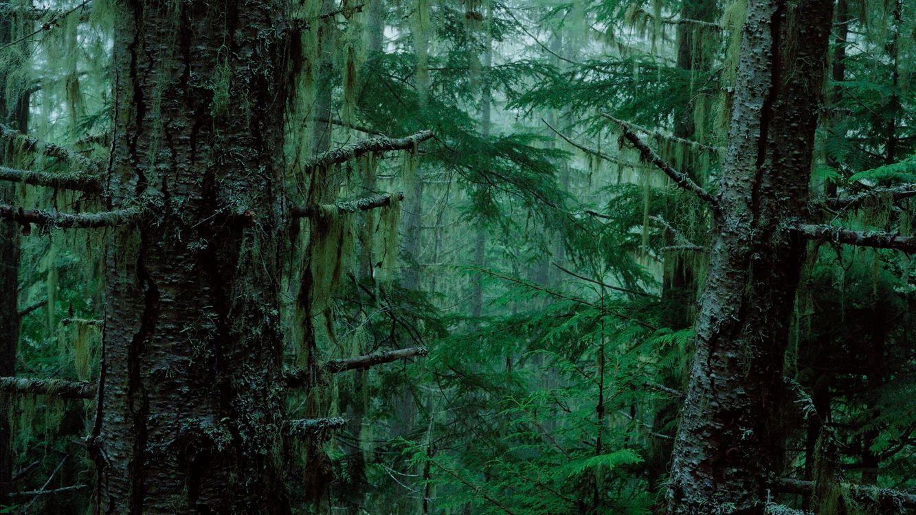 Фото бесплатно лес, деревья, красиво, страшно, жутко, елки, зелень, природа, природа
