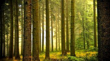 Бесплатные фото лес,деревья,трава,ветки,день,солнце,природа