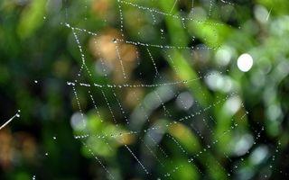 Фото бесплатно паутина, капли, роса