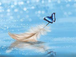 Фото бесплатно перышко, бабочка, голубая